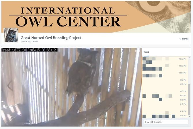 live feed owl