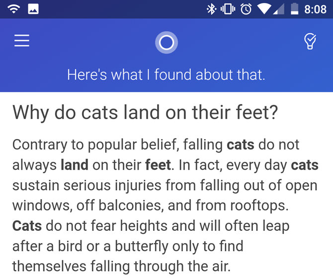Cortana Cat Question Answer