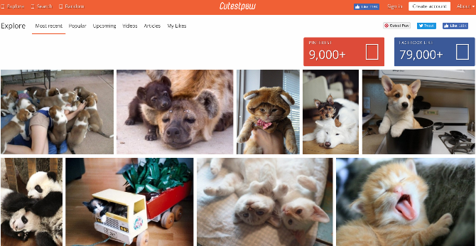 5 Sites for Cute Pet & Animal Pictures, GIFs, and Videos You Didn't Know cute animals cutestpaw