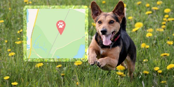The Best GPS Tracker for Dogs and Cats