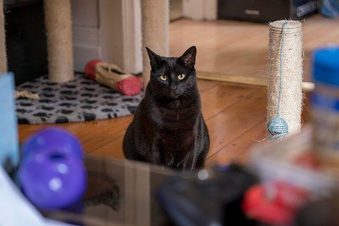 Mačka igračke Galore