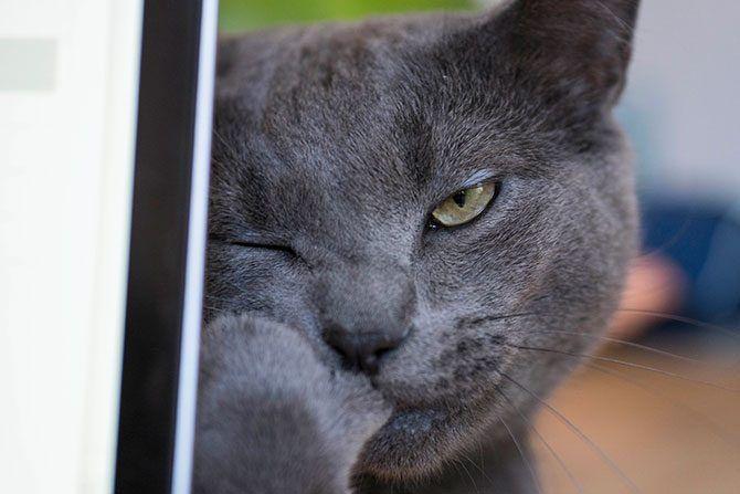 Mačka iza MacBooka