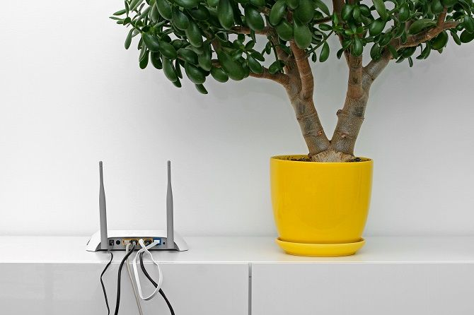 Wi-Fi Router Positioned Adjacent To Flower Pot