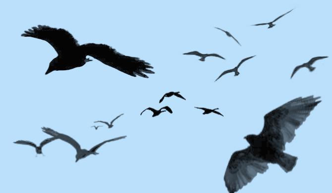 gimp brush birds
