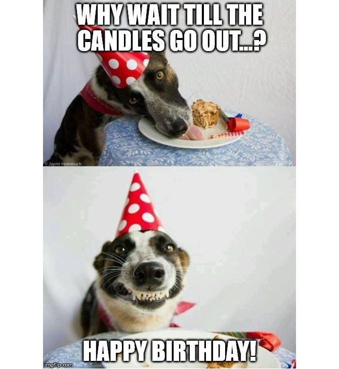 The 18 Best Happy Birthday Memes to Brighten Someone's Day