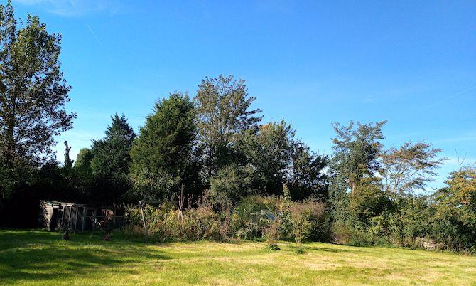 Doogee S70 Sample photo garden