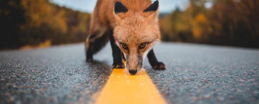 So beheben Sie den Firefox-Proxyserver, wenn Verbindungen abgelehnt werden