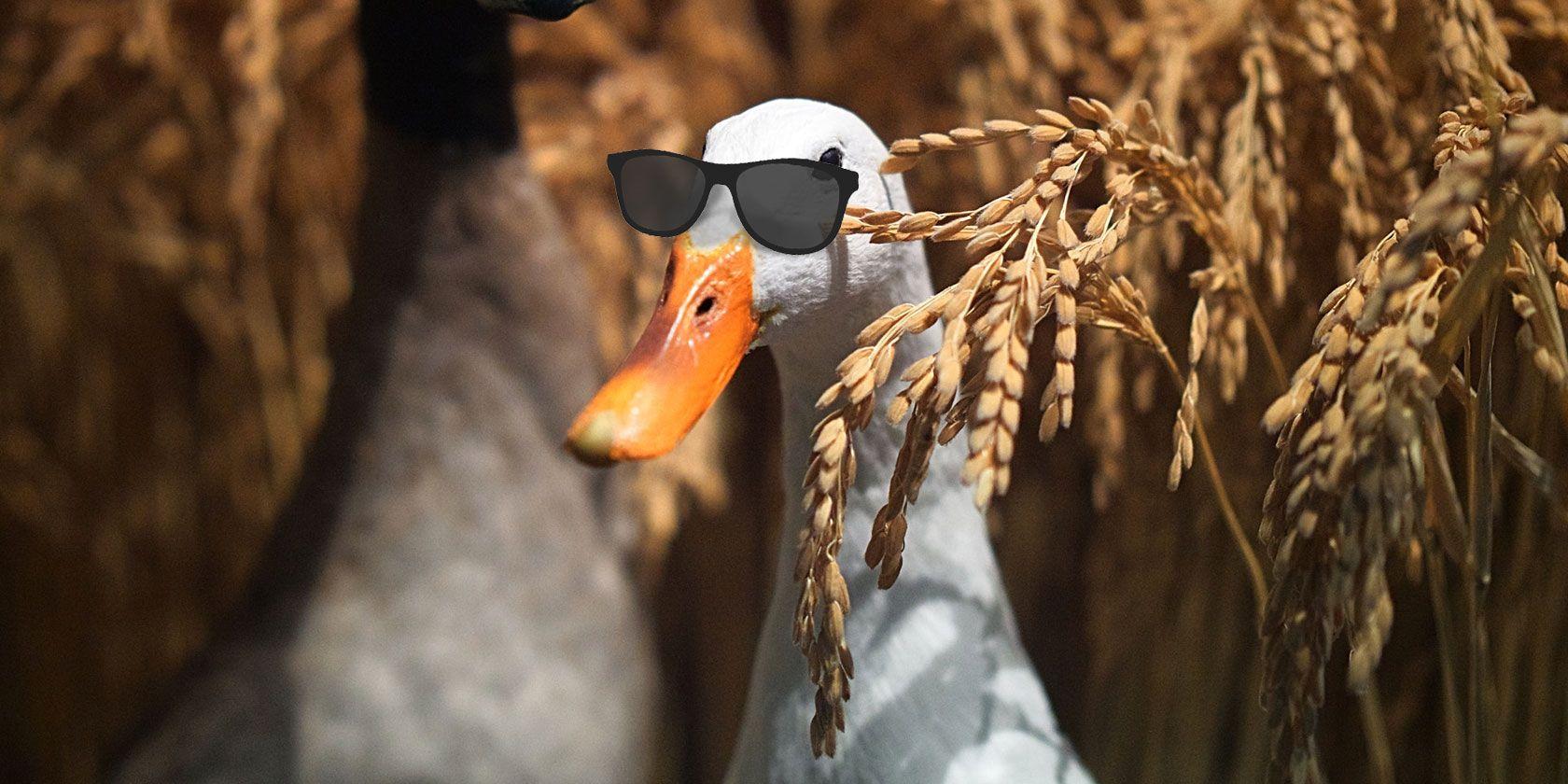duckduckgo-protect-info