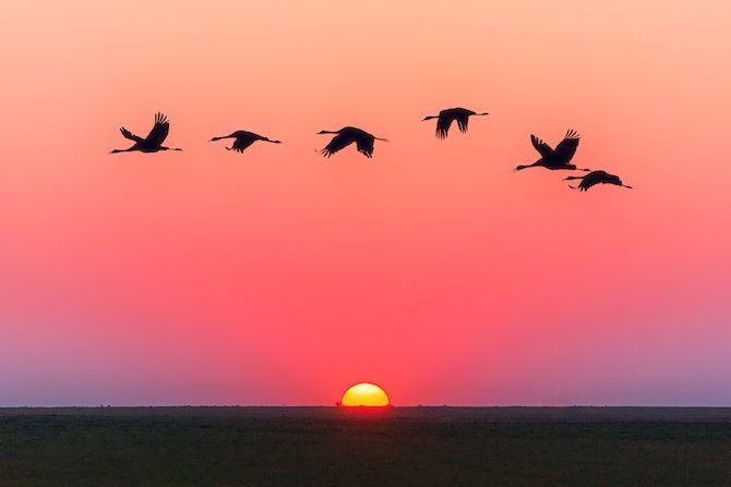Sunlit birds image using img src tags