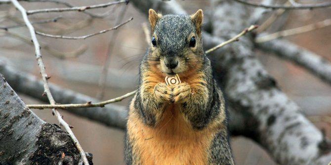 10 Cute Animal Instagram Accounts You Should Follow
