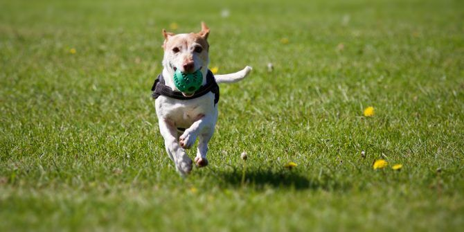 The 5 Best Free Online Dog Training Courses to Teach Your Pup New Tricks
