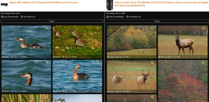 Объектив против Объектива позволяет сравнивать фотографии, сделанные двумя объективами