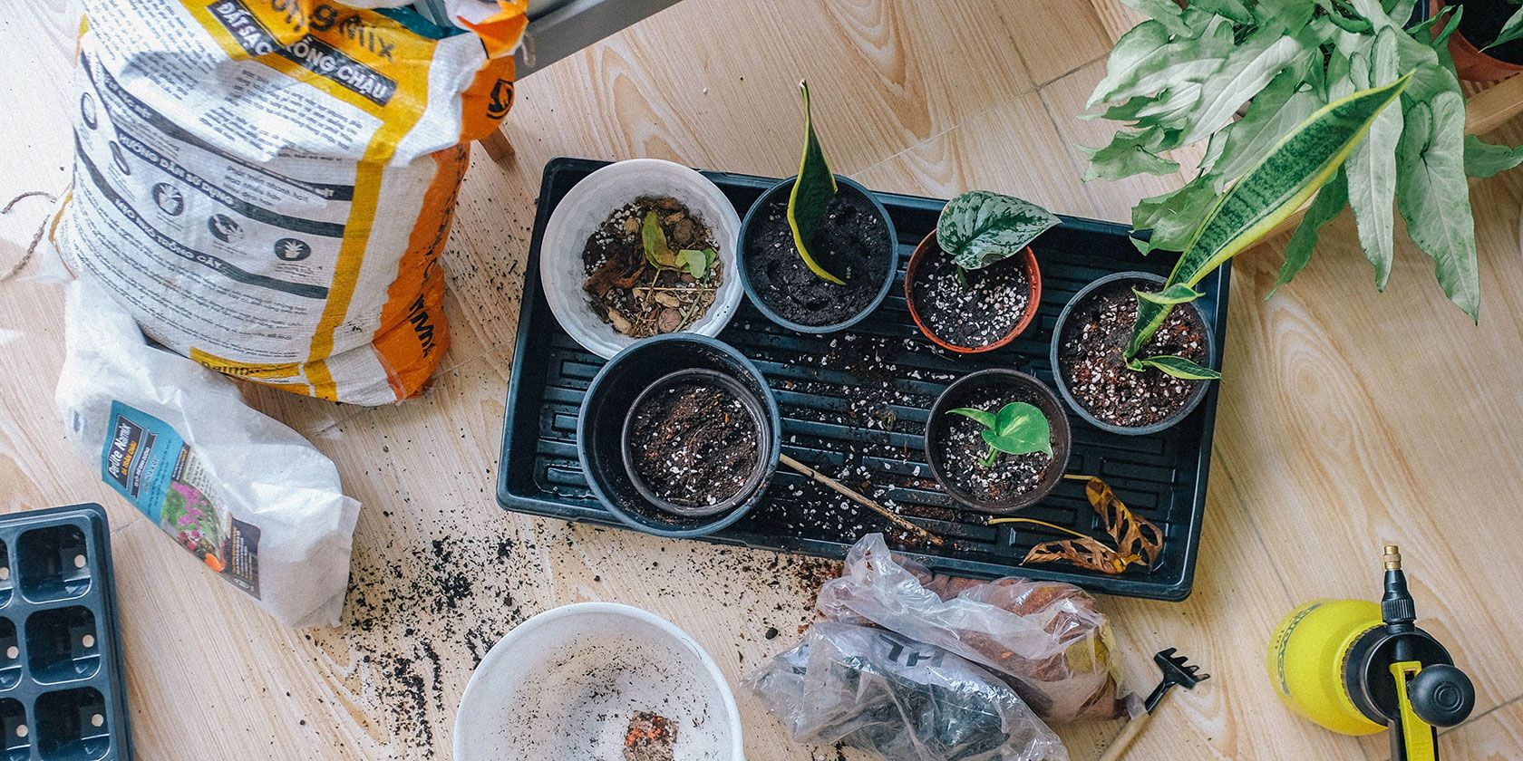Gardening apps and websites